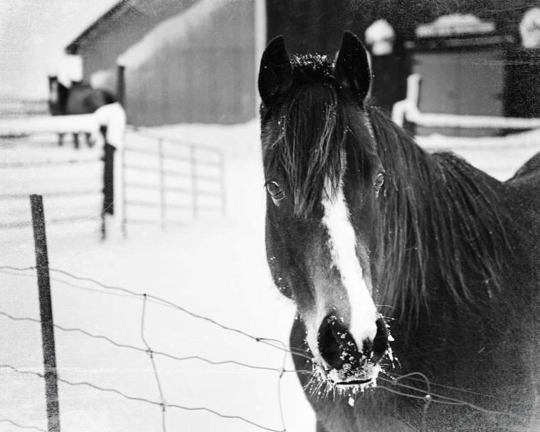 horseforbw