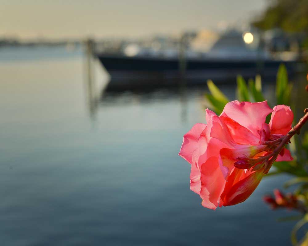 flowerandboat