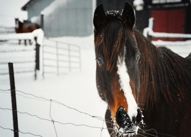 horsepostacrd