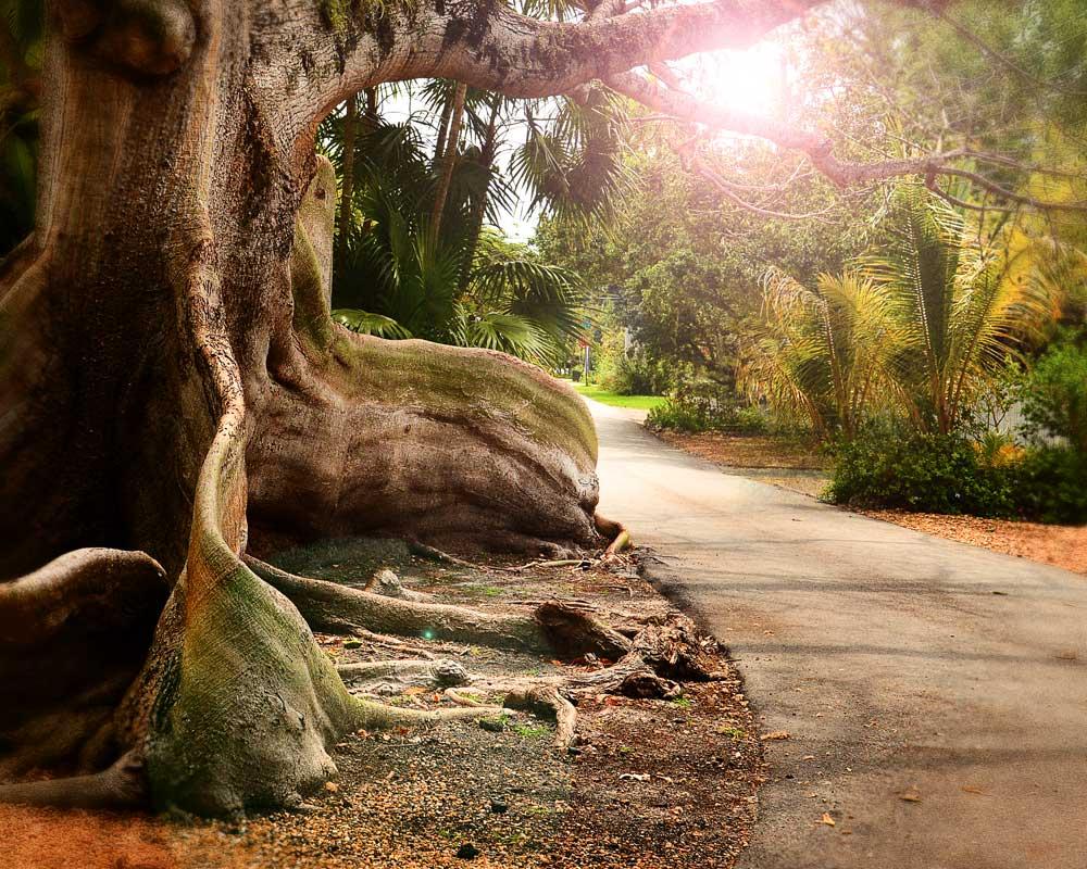 tree-coc-grove