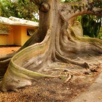 tree4sq