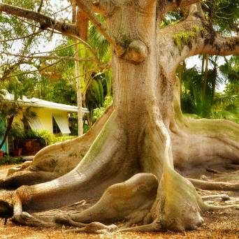 tree5sq