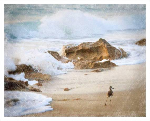 The wild sea...