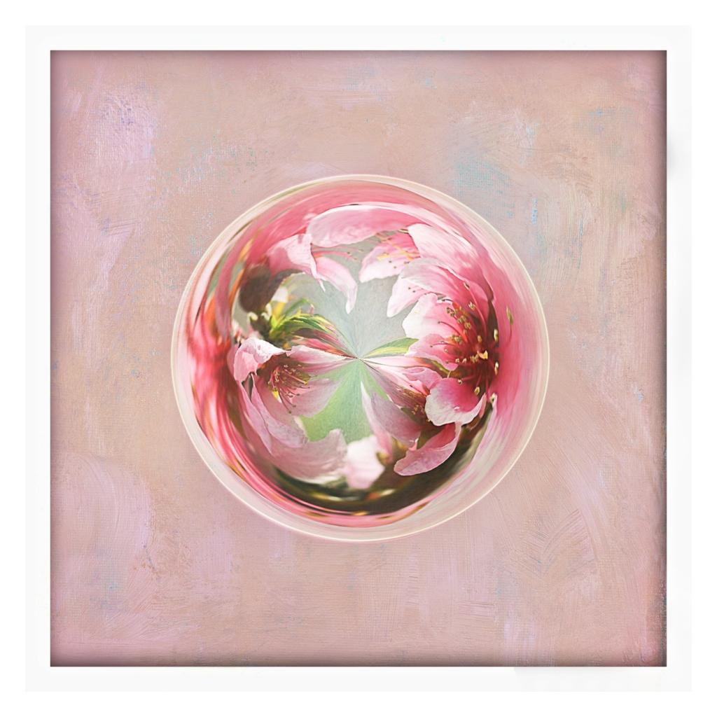 blossomorb
