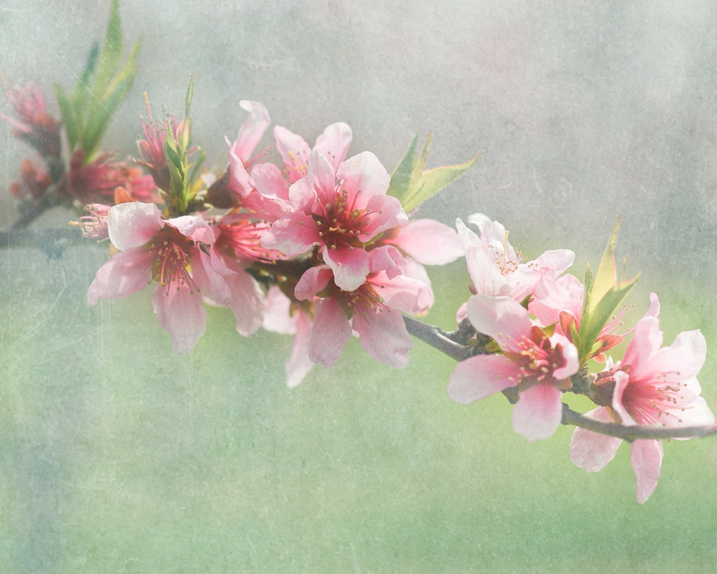 blossomtexture