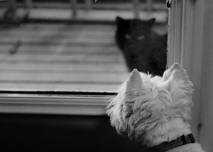 dogandcat-small