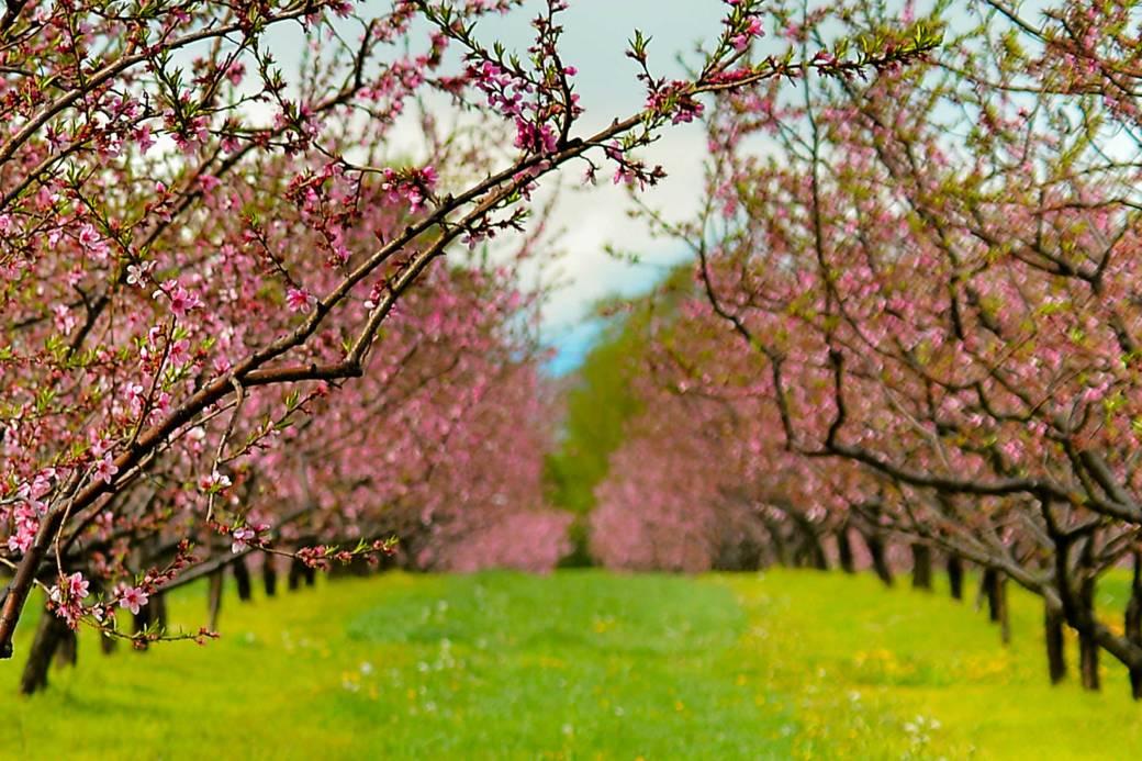 orchardsmall