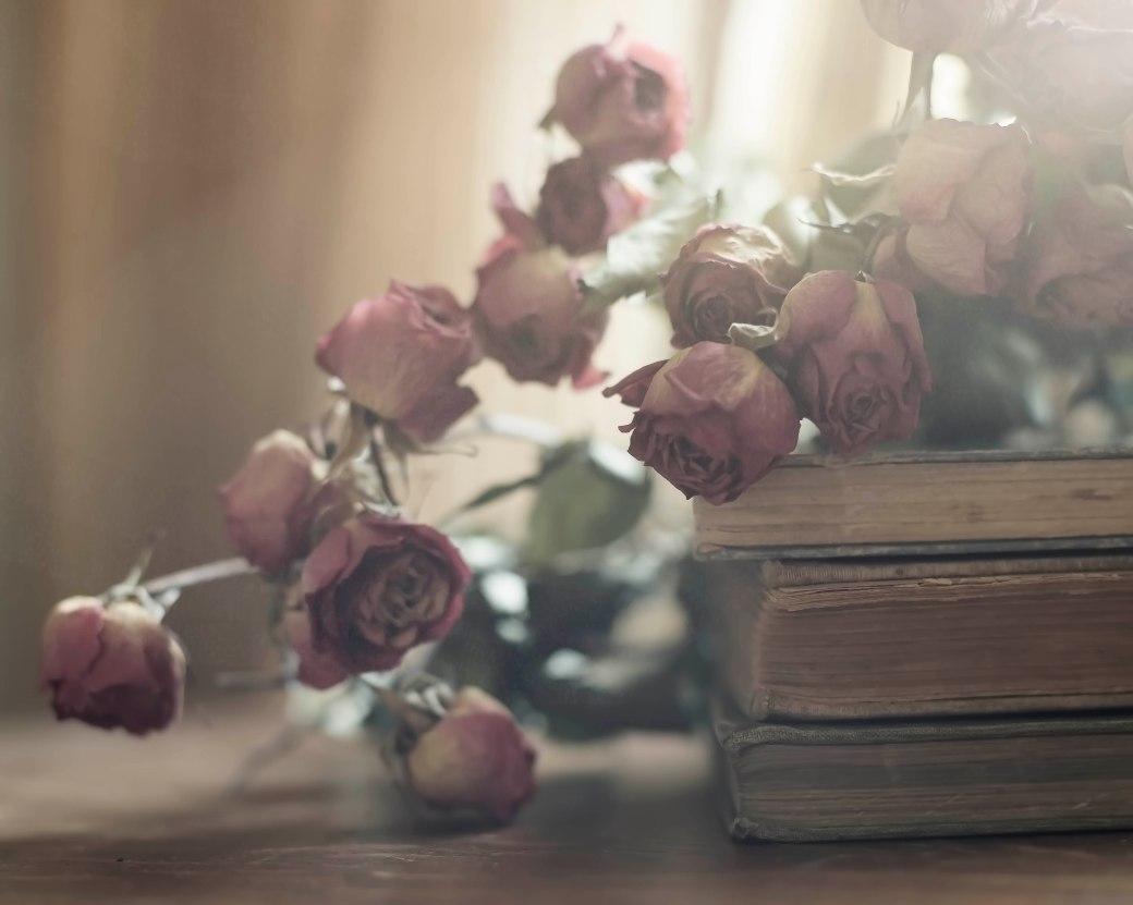 roses2low