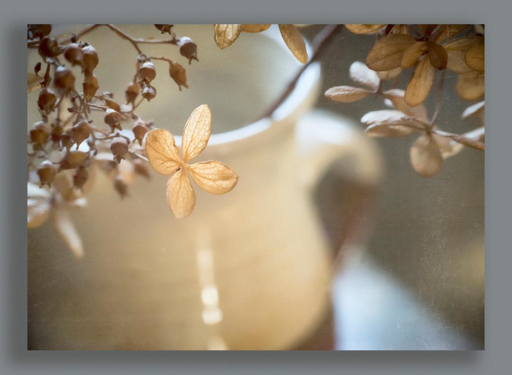 hydrangea nov 13-1000framed