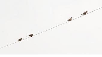 birds-1000