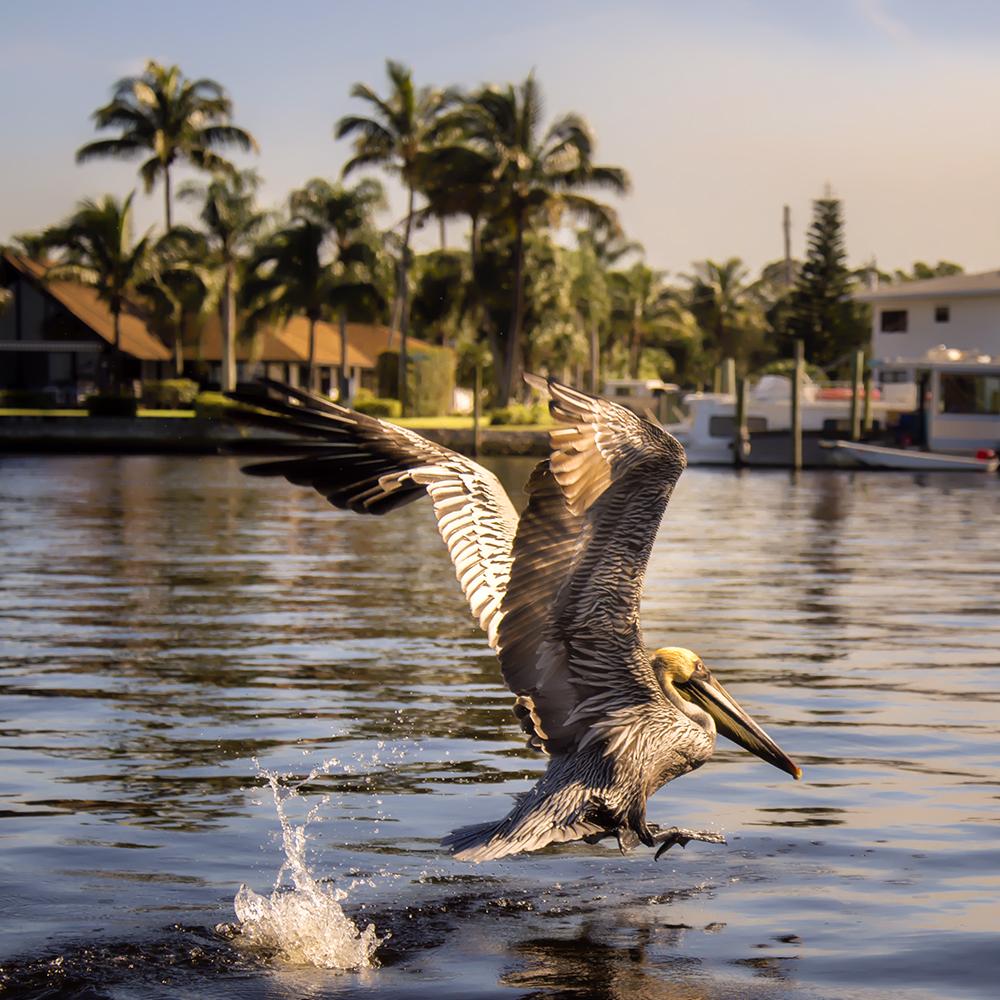 pelican 7small