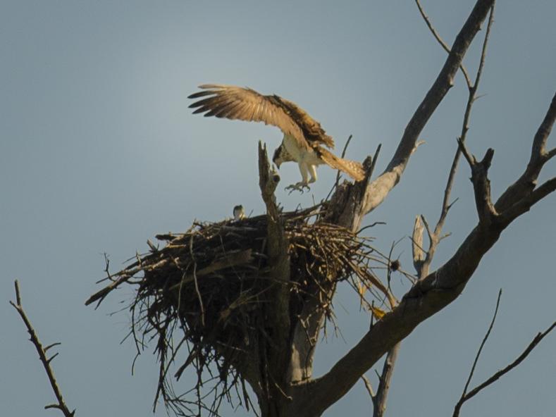 eagle icw
