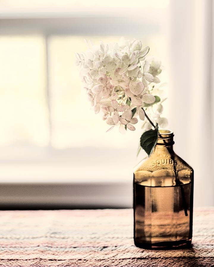 hydrangea in bottle