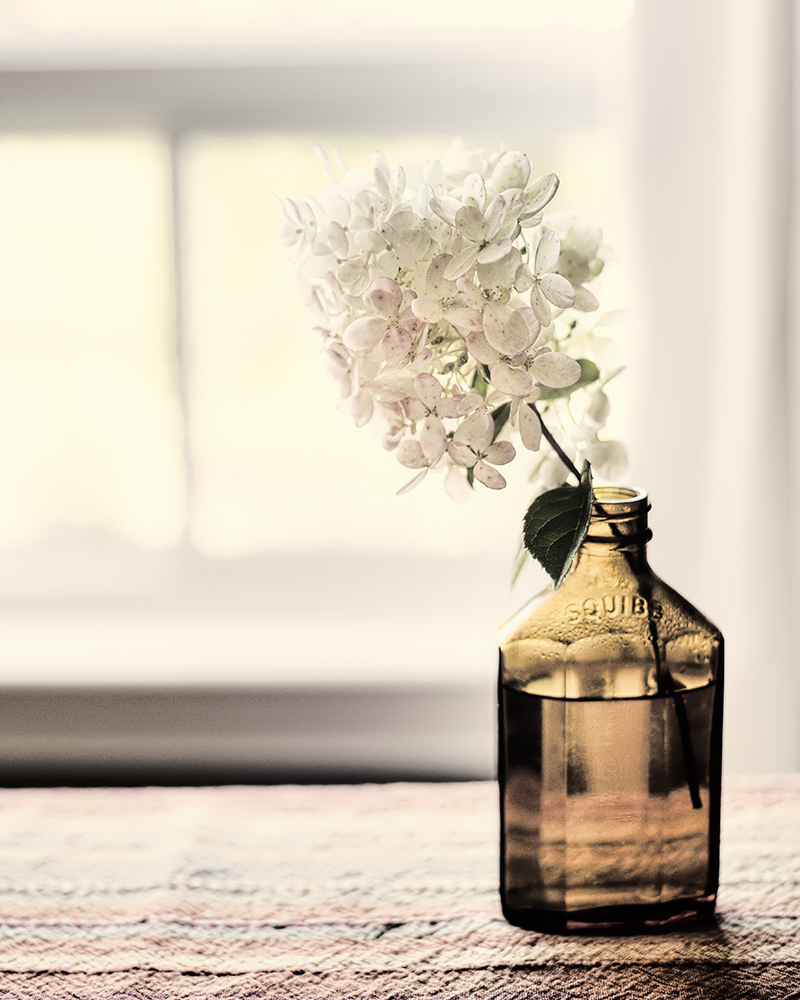 hydrangea in bottle