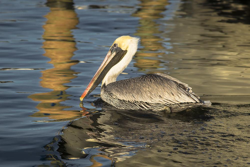 pelican pilingslr