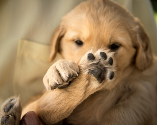 puppy10