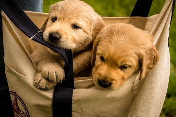 pups in tote