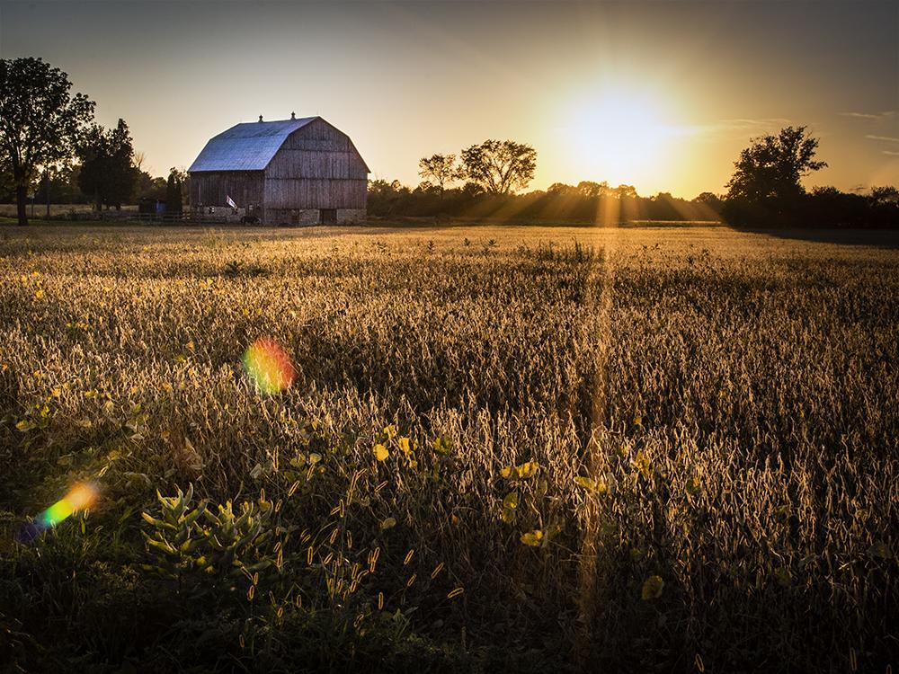 farm golden hourlr