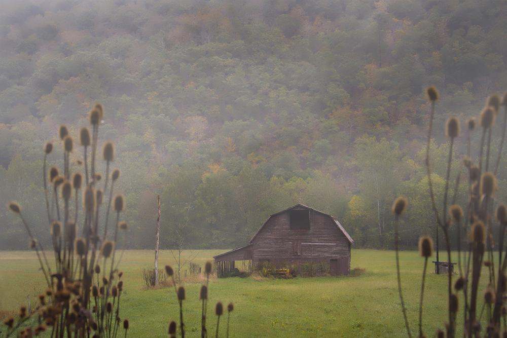misty scene