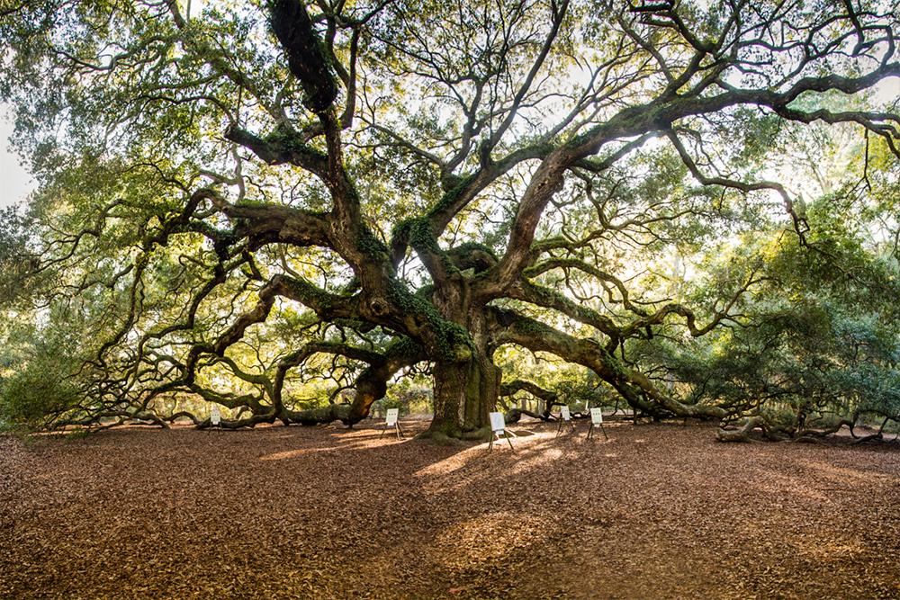 angel oak smallerlr