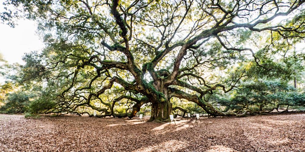 pano tree3lr