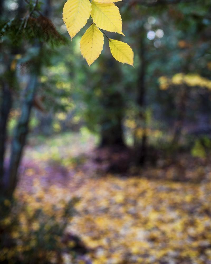 dreamy-forest-walk3