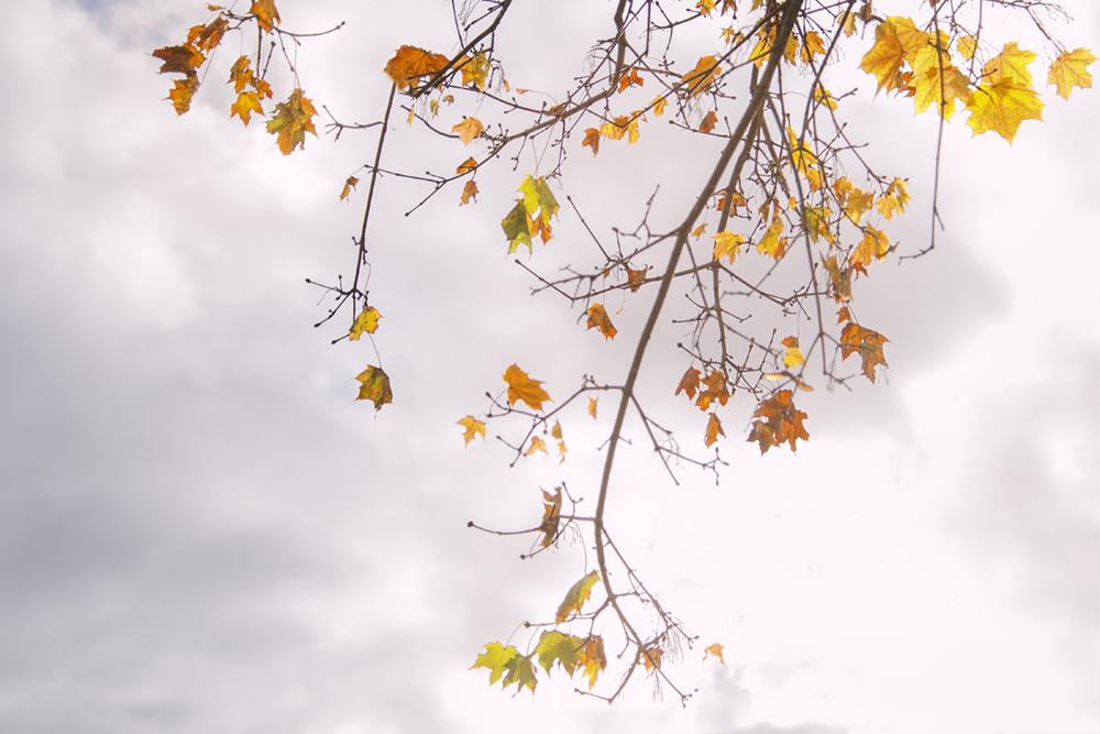 fall-filigree