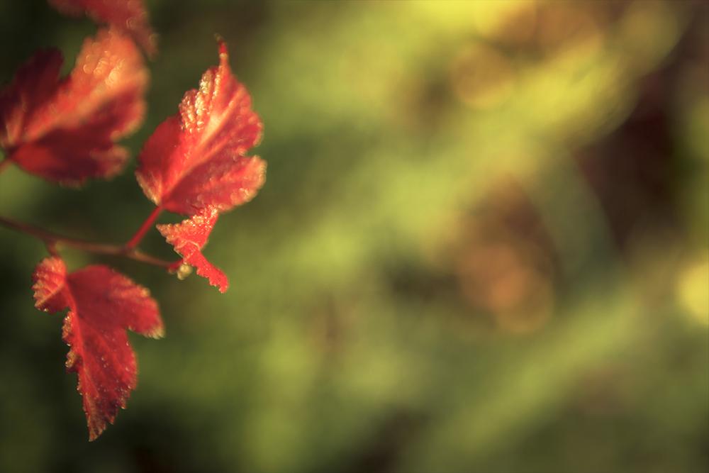 leaves-left
