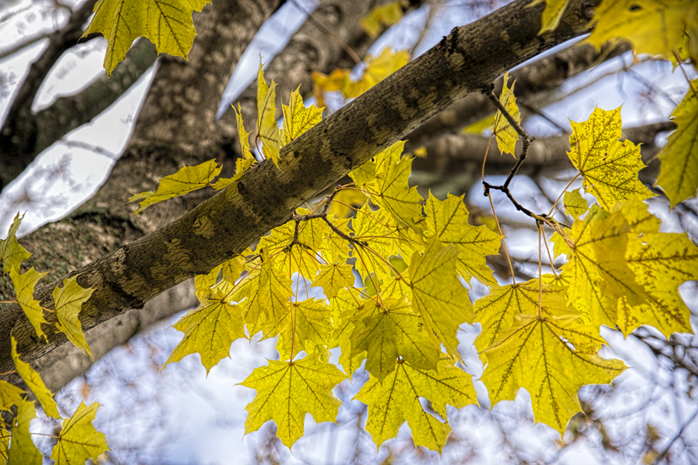 leaves-nov