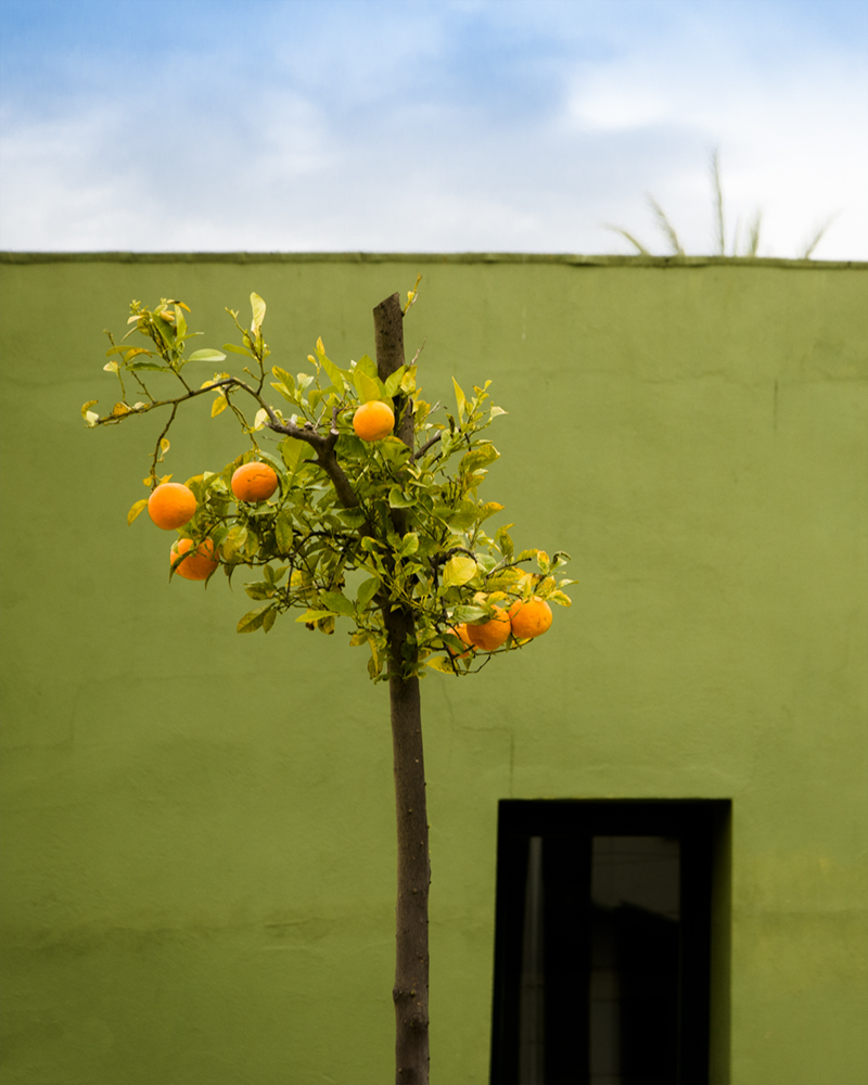 little-orange-tree