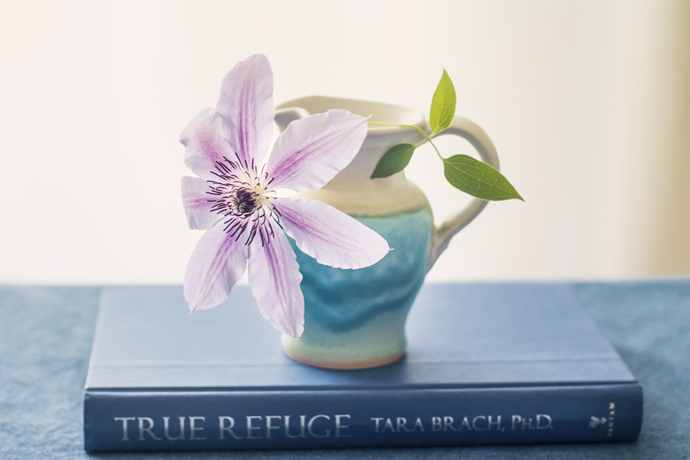 clematis for books and blooms