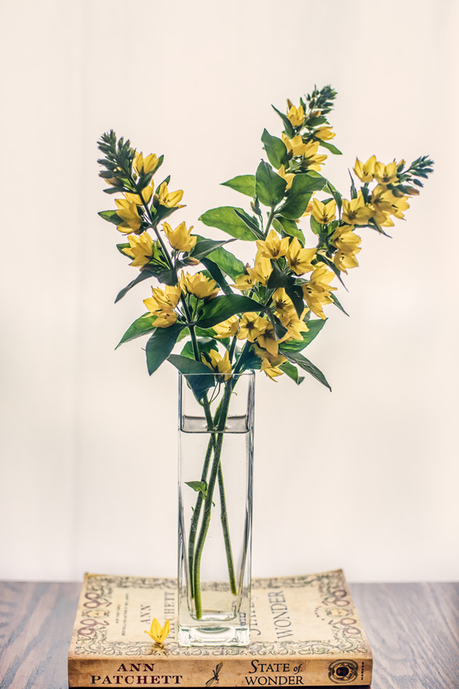 yellow flowers in vase
